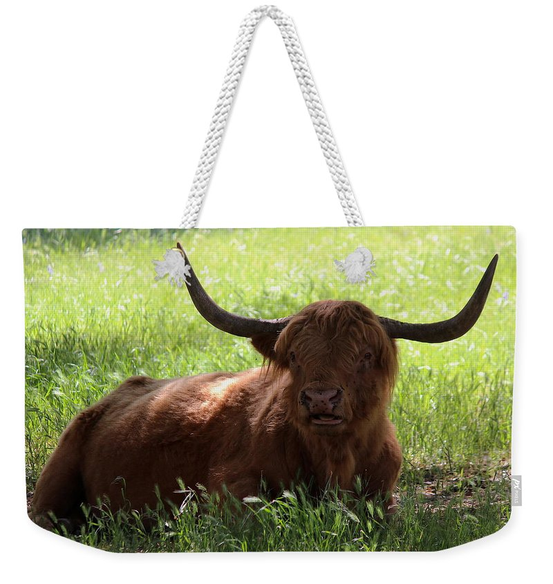 T50yp Weekender Tote Bag featuring the photograph Irish Dexter Three by Nicholas Miller