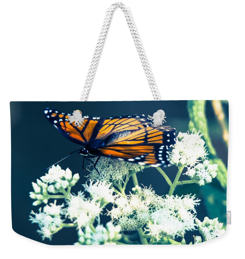 Viceroy Butterfly Weekender Tote Bag featuring the photograph Its Been Awhile by Kristin Hunt