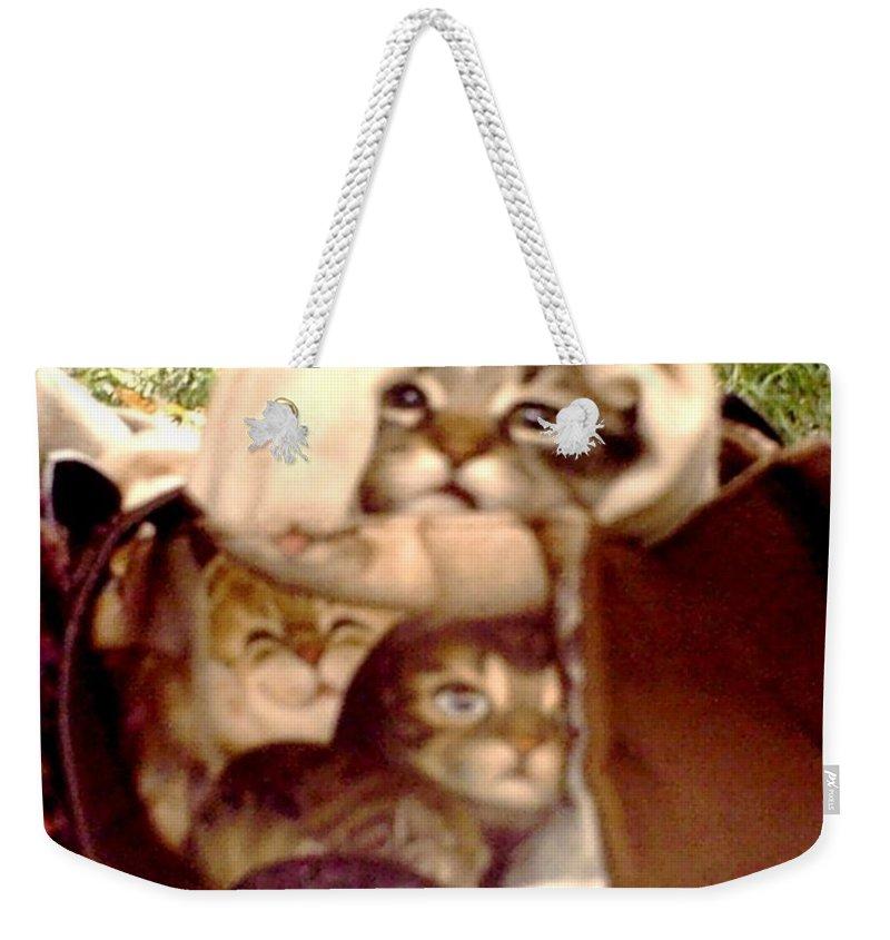 Cats Weekender Tote Bag featuring the photograph It's Cold by Nataliya Kolpakova