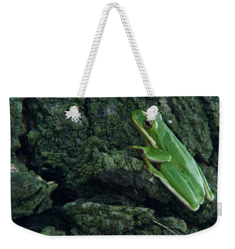 Frog Weekender Tote Bag featuring the photograph Its Hard To Be Green by Douglas Barnett