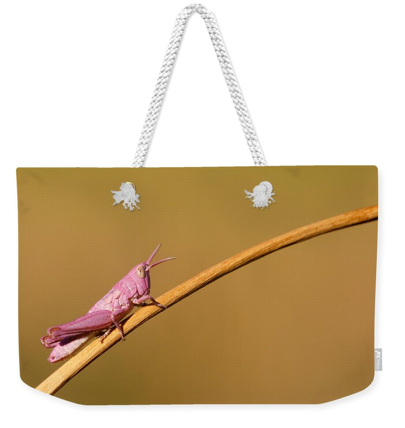 Pink Grasshopper Weekender Tote Bag featuring the photograph It's Not Easy Being Pink by Roeselien Raimond