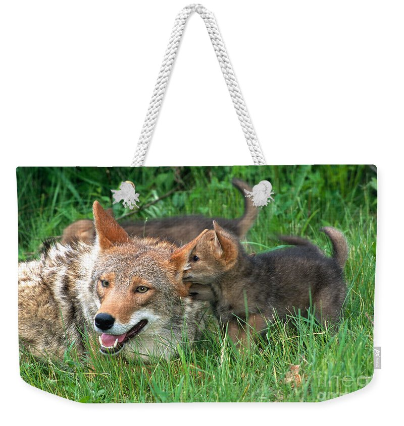 Coyote Weekender Tote Bag featuring the photograph I've Got A Secret by Sandra Bronstein