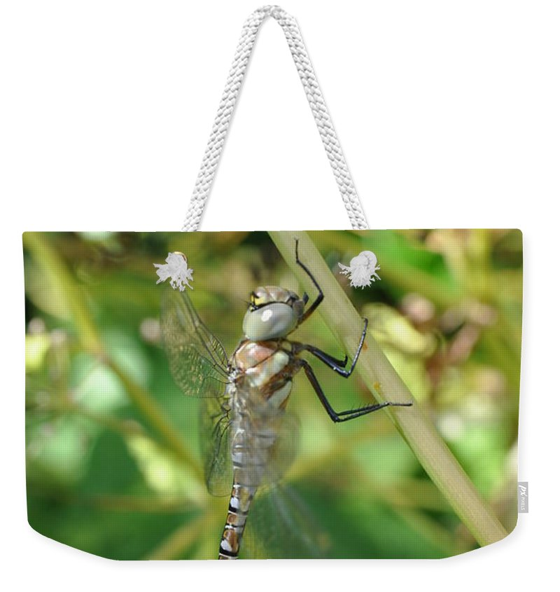 Dragonfly Weekender Tote Bag featuring the photograph I've Got An Eye On You by Eduard Meinema