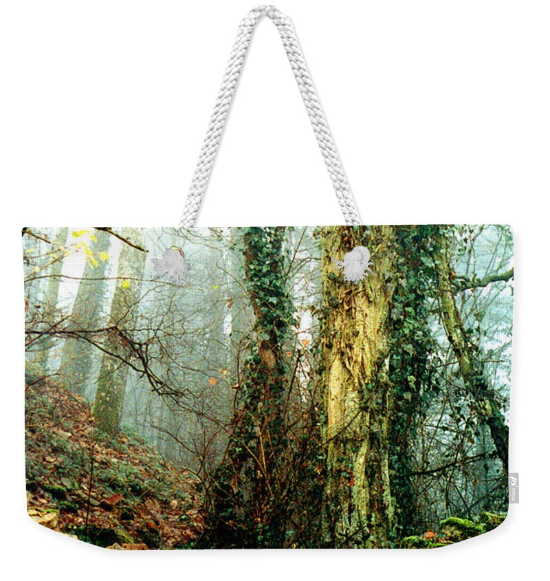 Ivy Weekender Tote Bag featuring the photograph Ivy In The Woods by Nancy Mueller