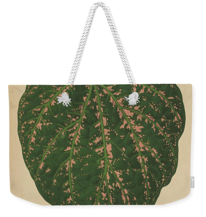 Ivy Weekender Tote Bag featuring the painting Ivy Leaf, Cissus Porphyrophyllus by English School