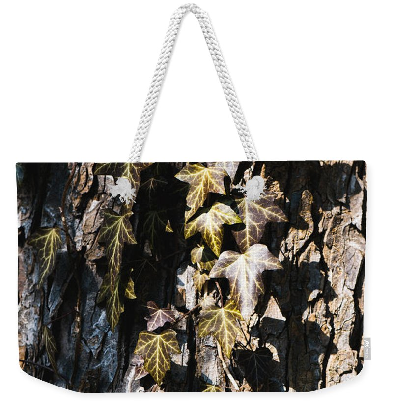 Grunge Weekender Tote Bag featuring the photograph Ivy Leaves Grunge Tone by Arletta Cwalina