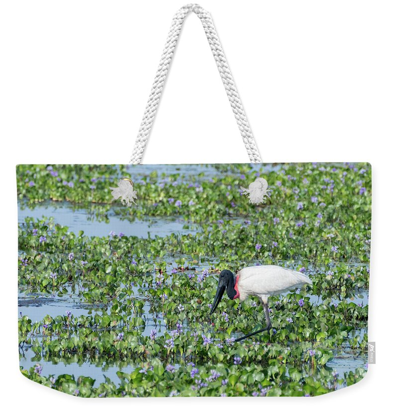 Brazil Weekender Tote Bag featuring the photograph Jabiru by Mike Timmons