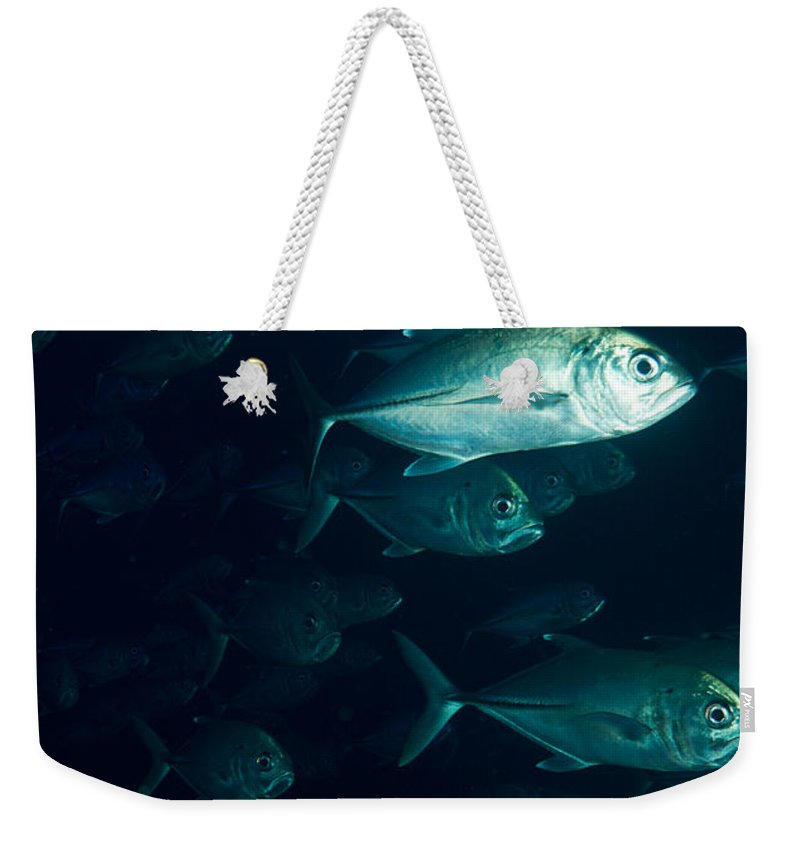 Solomons Weekender Tote Bag featuring the photograph Jack Flush by Mumbles and Grumbles