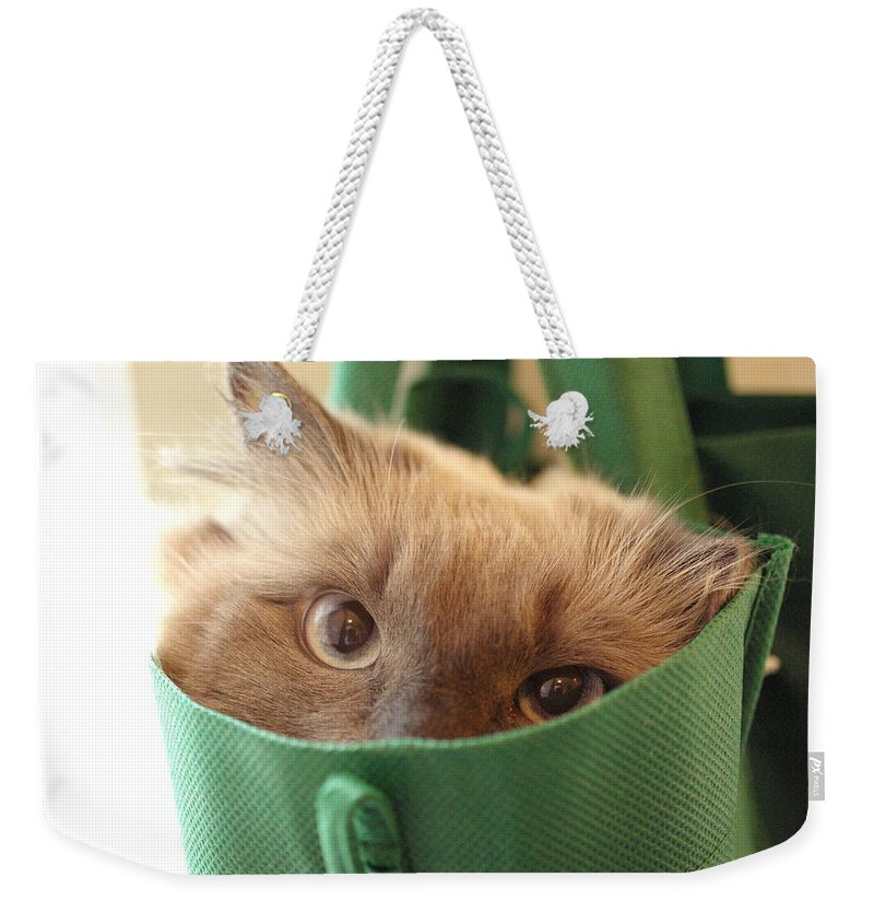 Cat Weekender Tote Bag featuring the photograph Jack In The Bag by Cindy Johnston