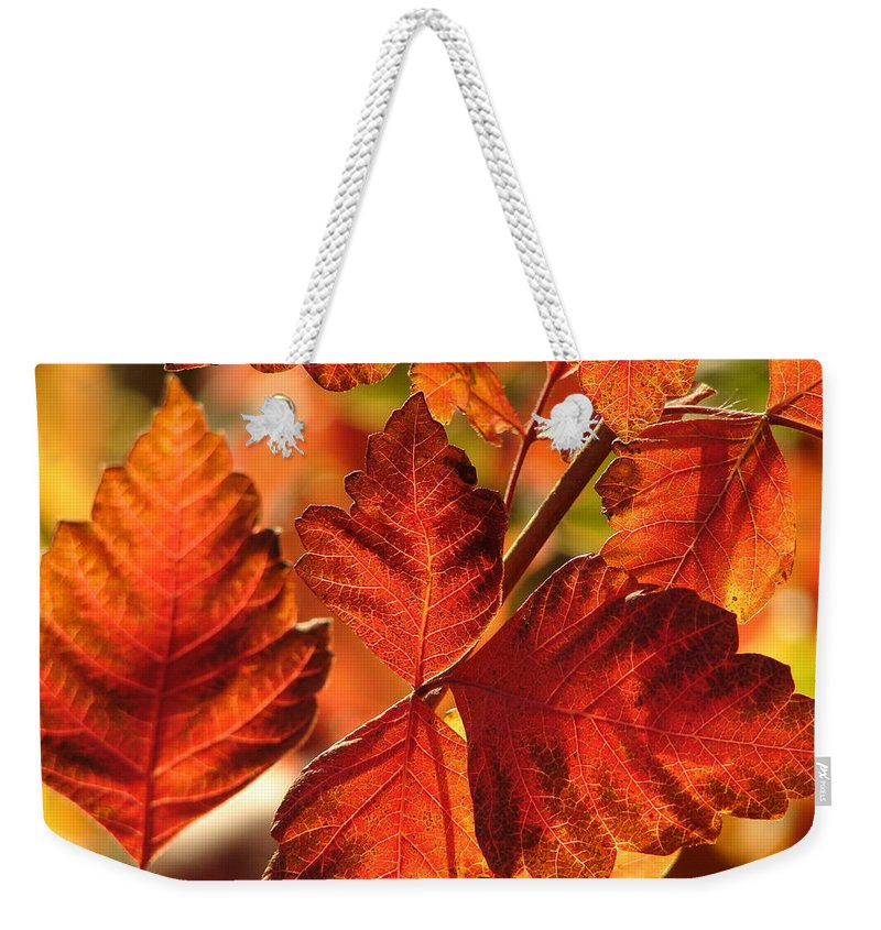 Photograph Weekender Tote Bag featuring the photograph Jack Painted My Yard by J R Seymour