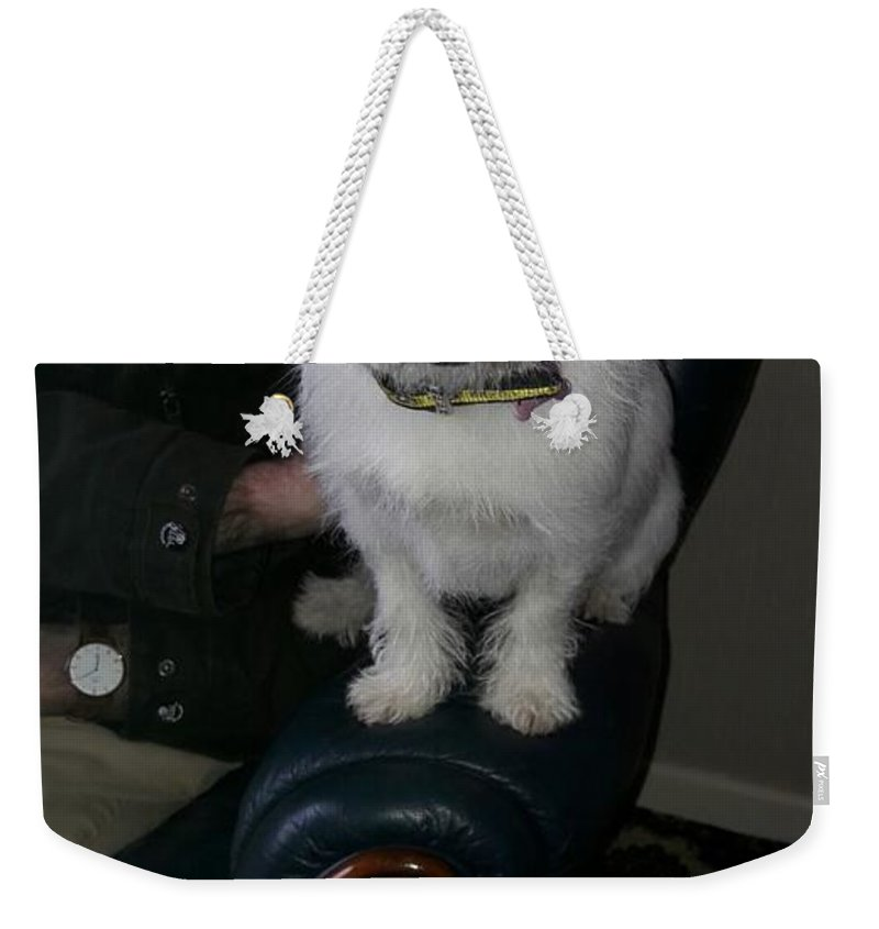 Long Haired Jack Russel Dog Weekender Tote Bag featuring the photograph Jack Russel by Billy Stewart