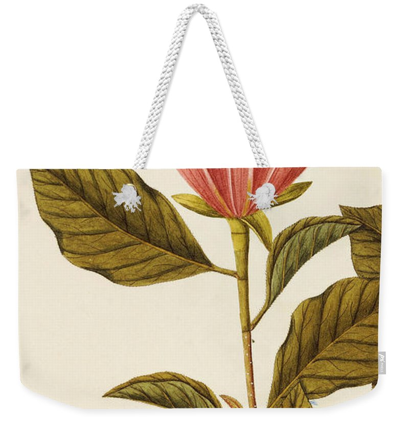 Pink Weekender Tote Bag featuring the painting Japanese Bigleaf Magnolia by Angela Rossi Bottione