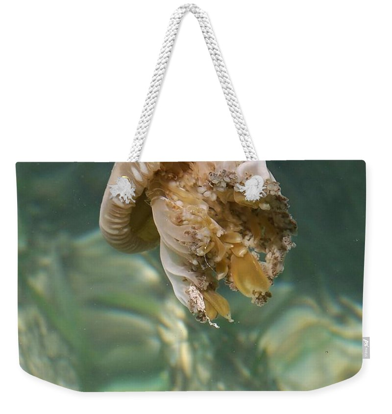 Jelly Weekender Tote Bag featuring the photograph Jelly Belly by Gale Cochran-Smith