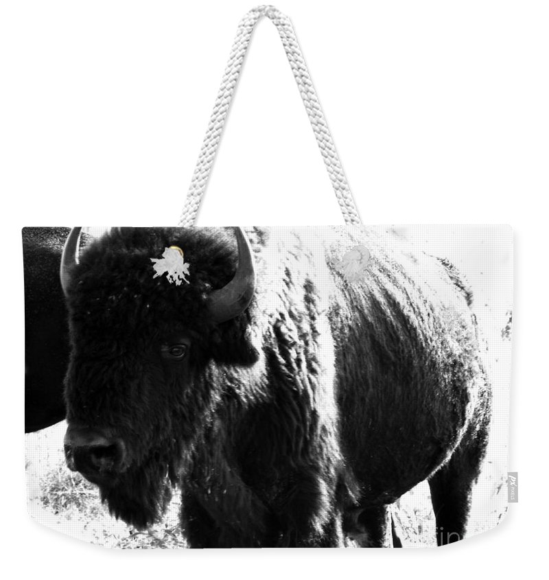 Buffalo Weekender Tote Bag featuring the photograph Join The Party by Amanda Barcon