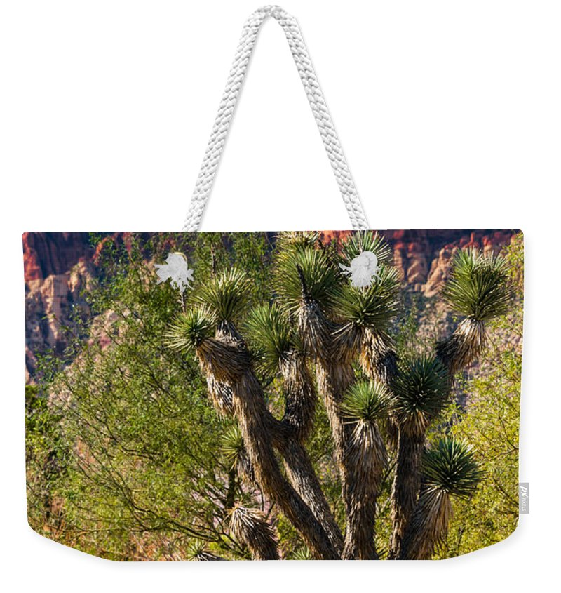joshua Tree Weekender Tote Bag featuring the photograph Joshua Tree by Anthony Sacco