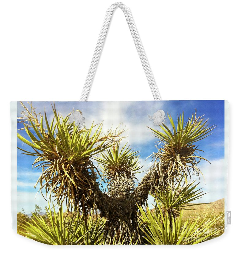 Nature Weekender Tote Bag featuring the photograph Joshua Tree Claiming To The Heavens Above by Xabi Lobo