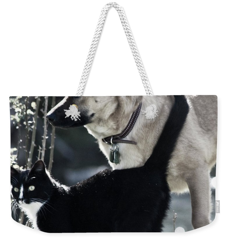 Dog And Cat Weekender Tote Bag featuring the photograph Journey by Betsy Knapp