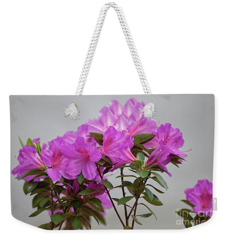 Judge Solomon Azalea. Flower Weekender Tote Bag featuring the photograph Judge Solomon Azalea by Dale Powell