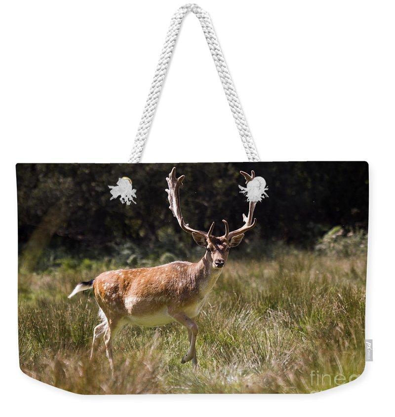 Fallow Deer Weekender Tote Bag featuring the photograph Jump Jump by Angel Ciesniarska