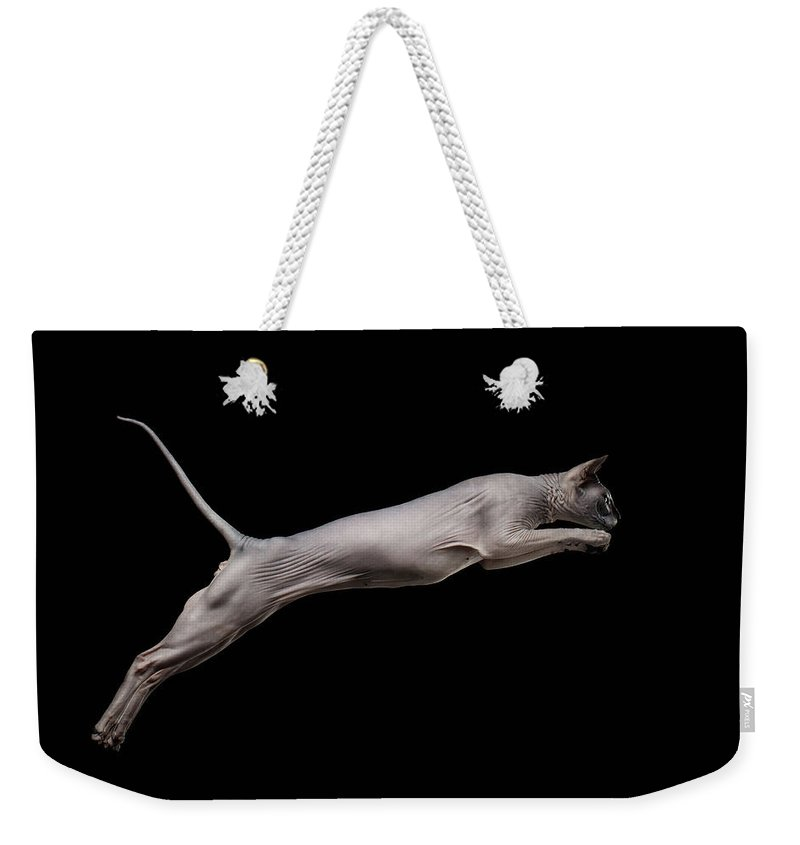 Sphynx Weekender Tote Bag featuring the photograph Jumped Sphynx Cat Isolated On Black by Sergey Taran