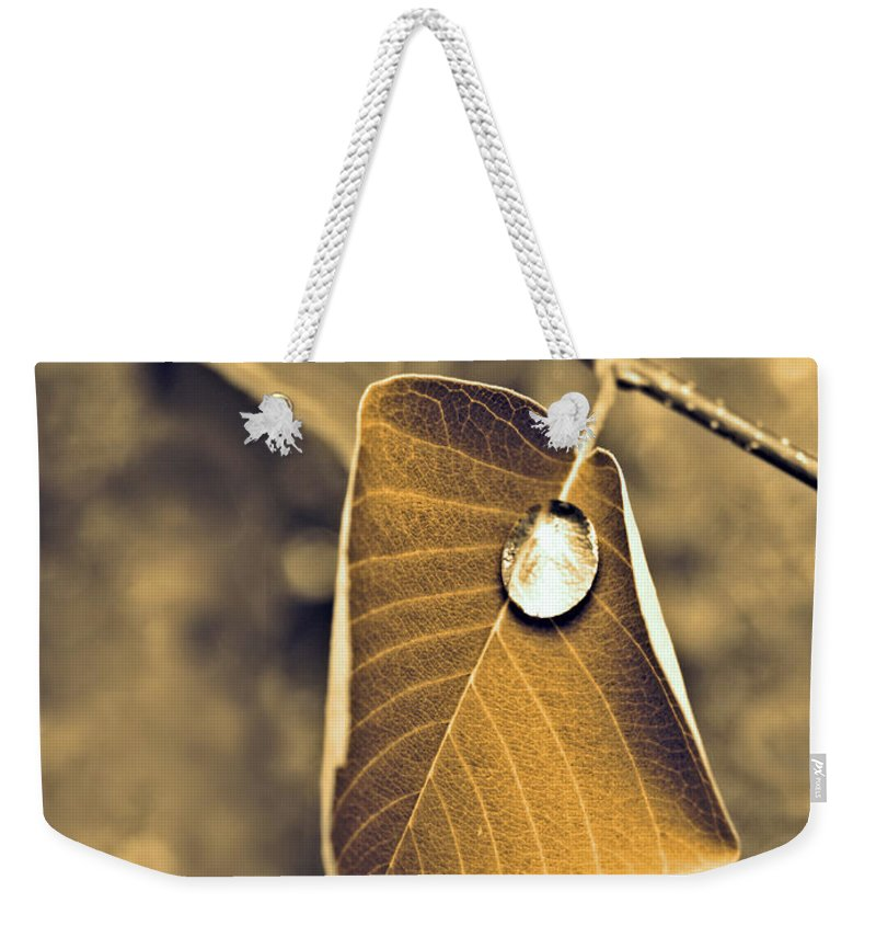 Leaf Weekender Tote Bag featuring the photograph June 18 2010 by Tara Turner