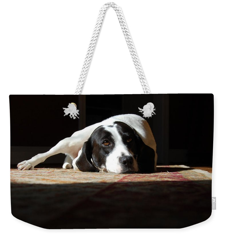 Dogs.animal Weekender Tote Bag featuring the photograph Junebug by Robert Meanor