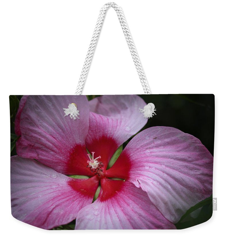 Hibiscus Weekender Tote Bag featuring the photograph Junes Hibiscus 2 by Teresa Mucha