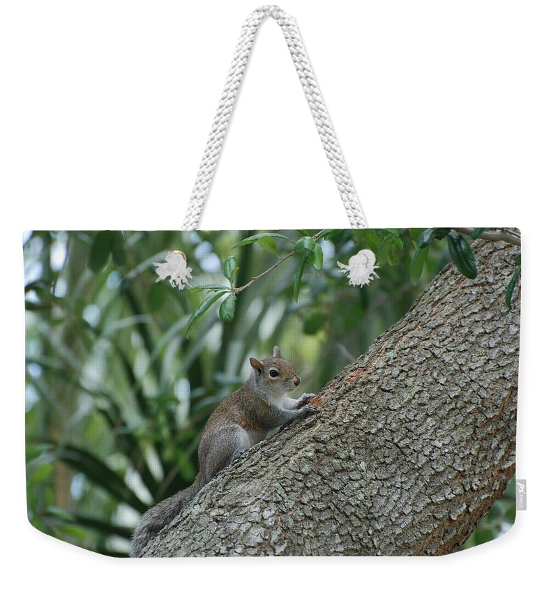 Squirrels Weekender Tote Bag featuring the photograph Just Chilling Out by Rob Hans