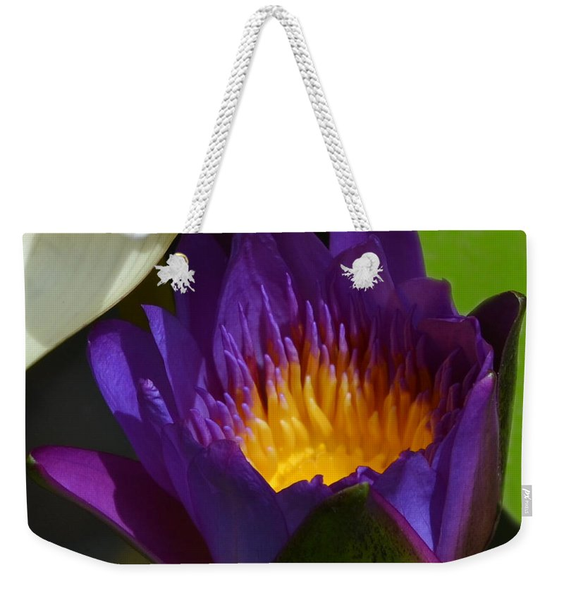 Purple Weekender Tote Bag featuring the photograph Just Opening Purple Waterlily - Square by AEC - Abundant Eight Creative