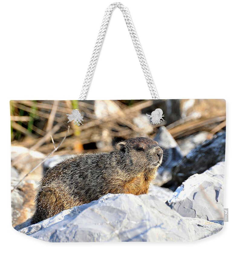 Ground Hog Weekender Tote Bag featuring the photograph Just Relaxing by Todd Hostetter