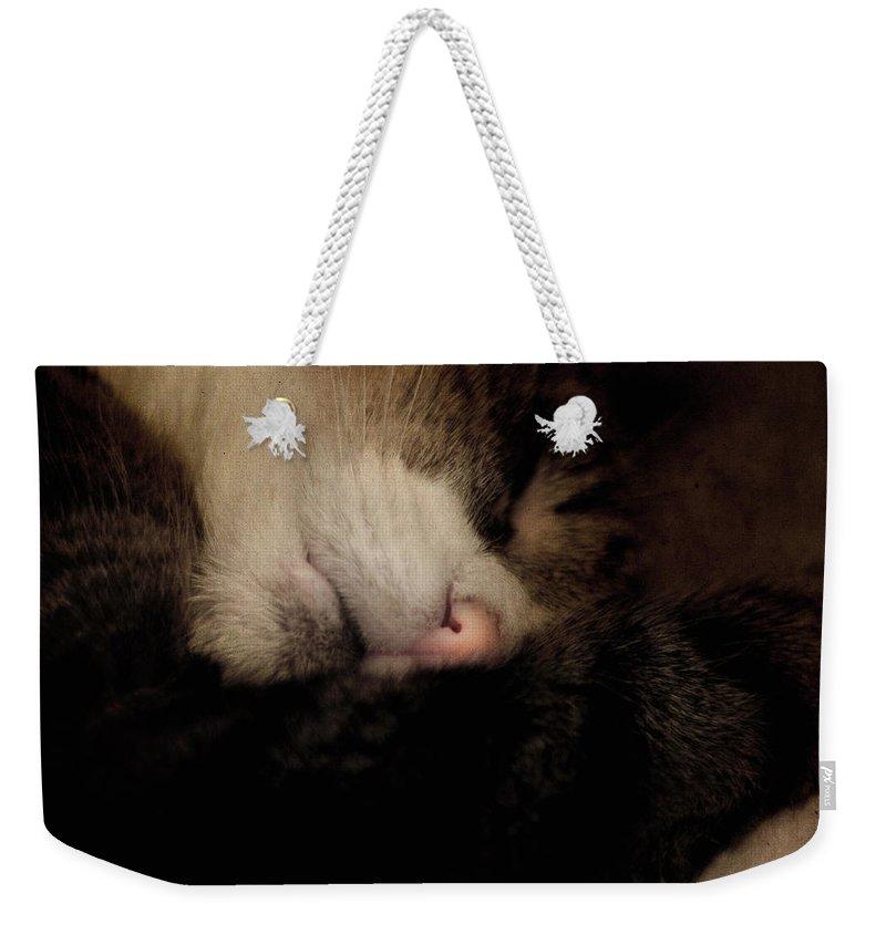 Cat Weekender Tote Bag featuring the photograph Just Sleep by Angel Ciesniarska