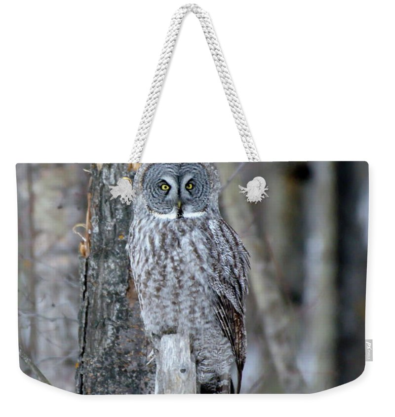 Nature Weekender Tote Bag featuring the photograph Just Us Tree Trunks by Crystal Massop