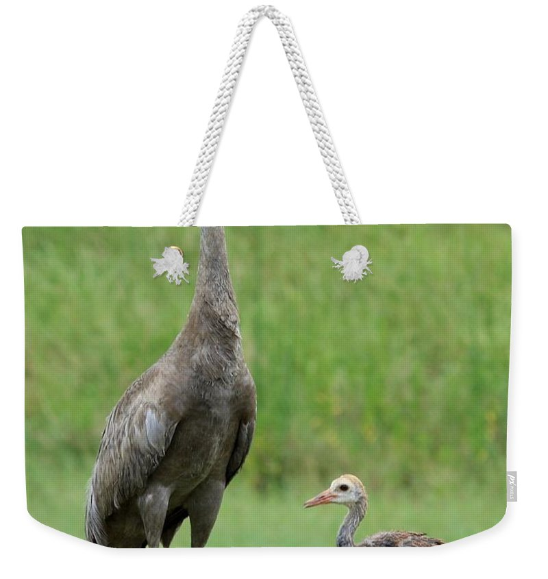 Sandhill Cranes Weekender Tote Bag featuring the photograph Juvenile Sandhill Crane With Protective Papa by Carol Groenen