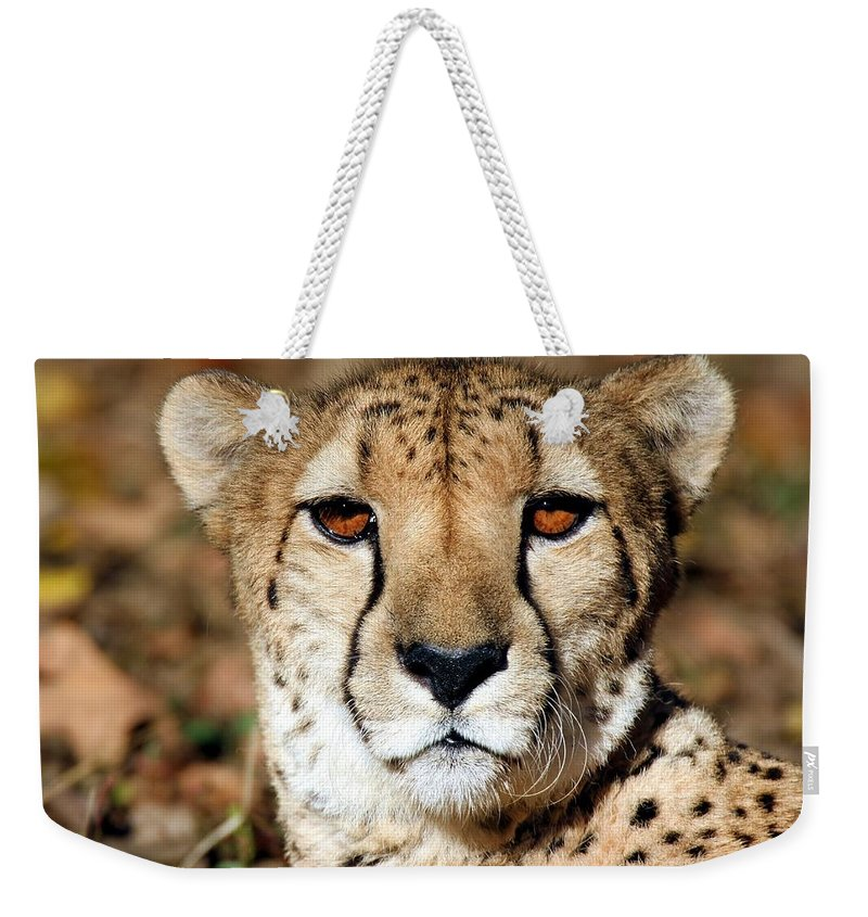 Cheetah Weekender Tote Bag featuring the photograph Kamaria by Christopher Miles Carter