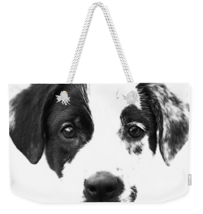 Dogs Weekender Tote Bag featuring the photograph Karma by Amanda Barcon