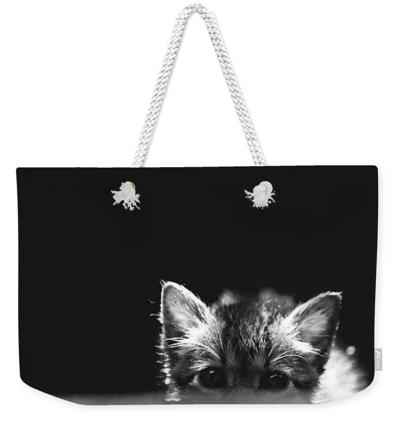 Cat Weekender Tote Bag featuring the photograph kat by George Cabig
