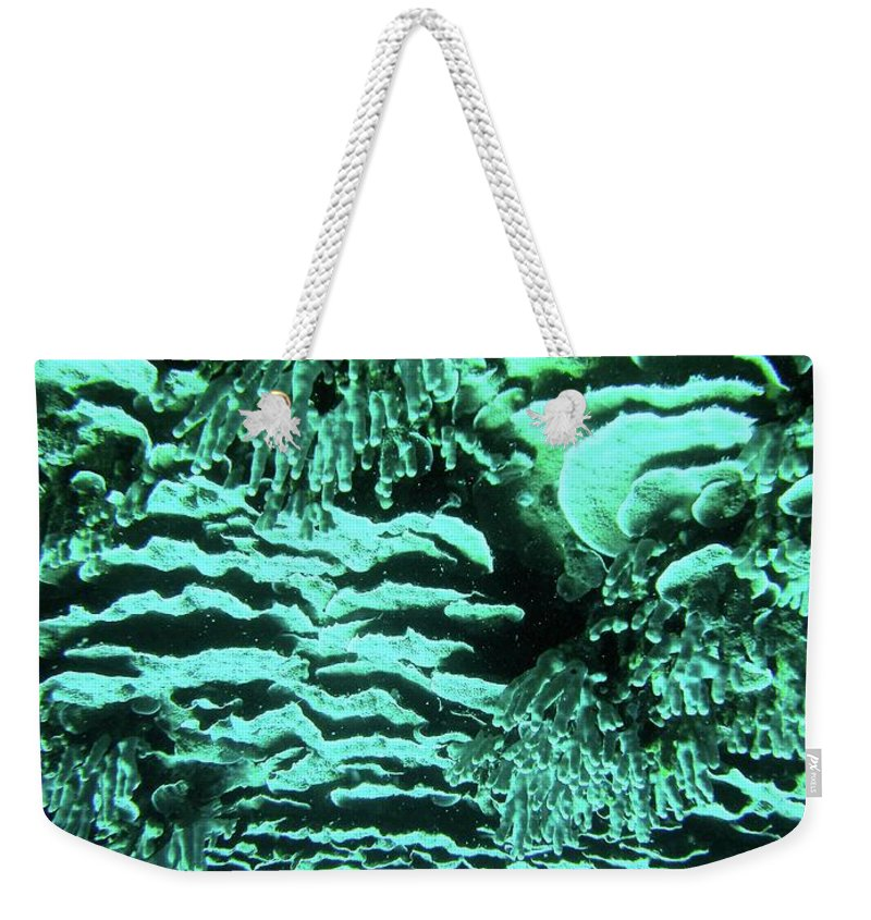 Coral Weekender Tote Bag featuring the photograph Kealakekua Plate Coral by Radine Coopersmith