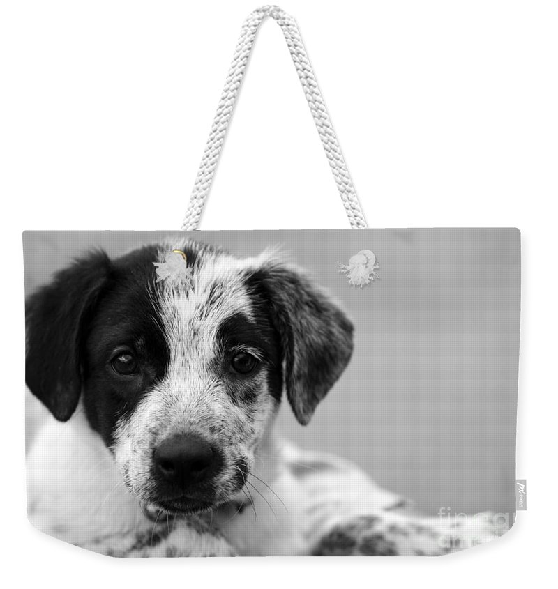 Dog Weekender Tote Bag featuring the photograph Keep Me by Amanda Barcon