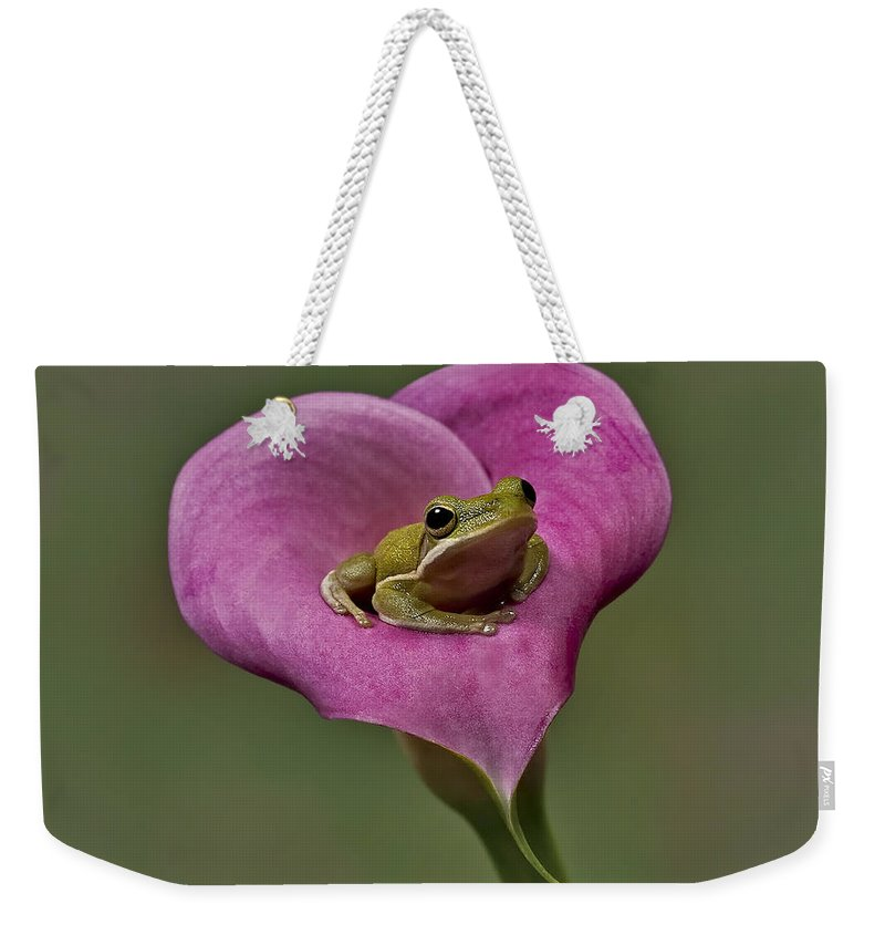 Calla Weekender Tote Bag featuring the photograph Kermit Hangs Out by Susan Candelario