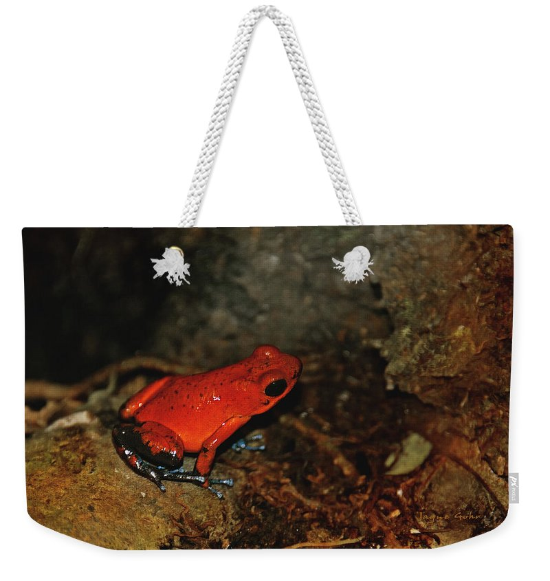 Frog Weekender Tote Bag featuring the photograph Kermits Cousin by Jayne Gohr