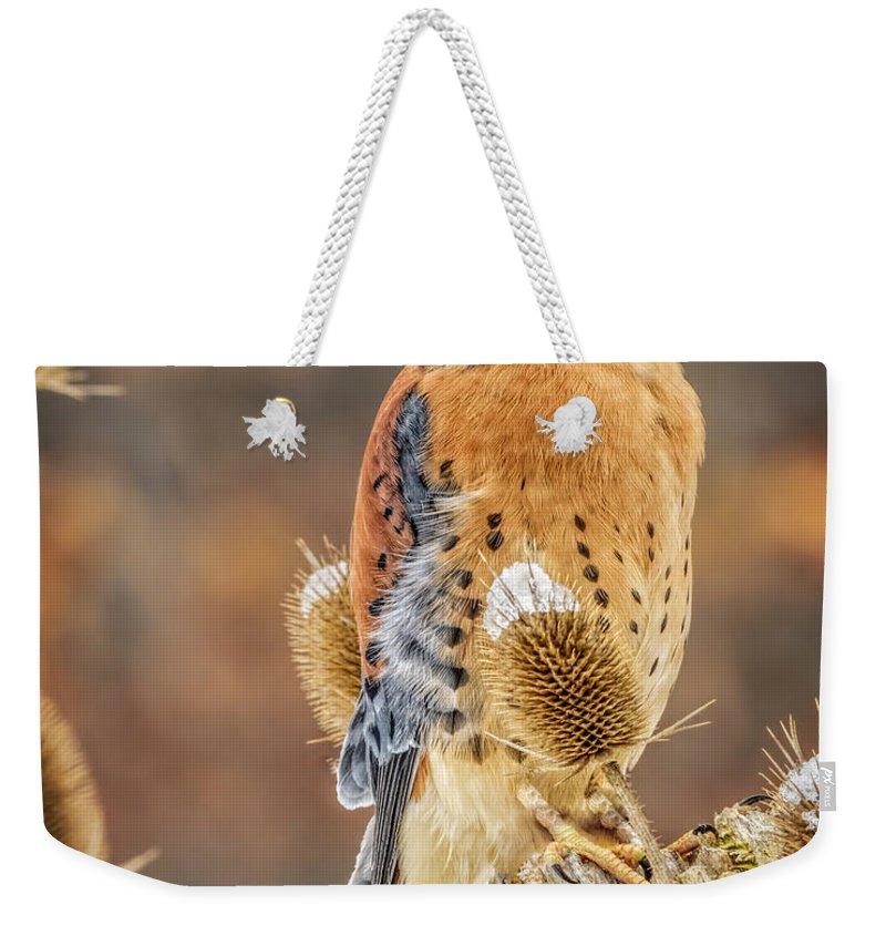 Nature Wear Weekender Tote Bag featuring the photograph Kestrel Nature Wear by LeeAnn McLaneGoetz McLaneGoetzStudioLLCcom