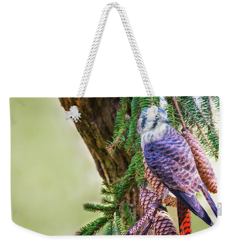 Kestrel Falcon Weekender Tote Bag featuring the photograph Kestrel On The Cones by Peg Runyan