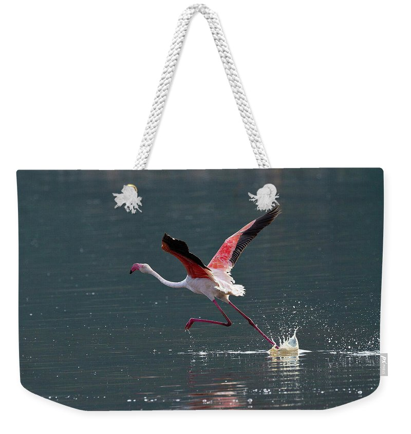 Flamingo Weekender Tote Bag featuring the photograph Kick Off by Janet Chung