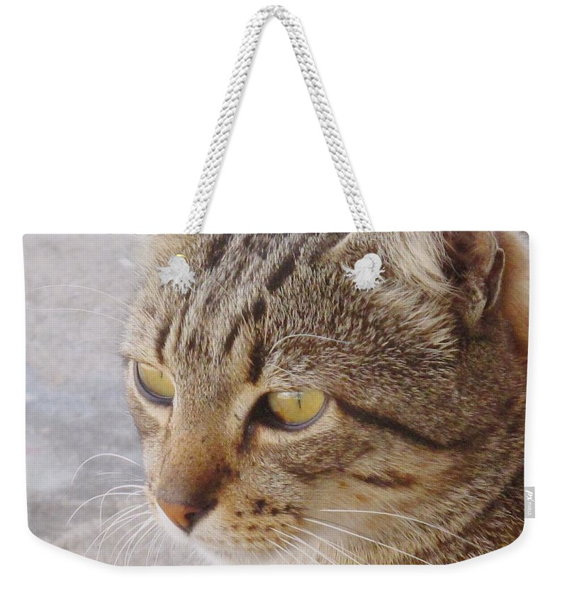 Cat Weekender Tote Bag featuring the photograph King Cat by Ian MacDonald