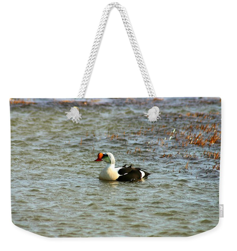 King Eider Weekender Tote Bag featuring the photograph King Eider by Anthony Jones