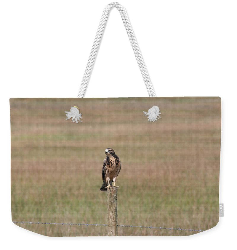 Hawk Wild Bird Nature Grass Fence Barbwire Flying Weekender Tote Bag featuring the photograph King Of His Domain. by Andrea Lawrence