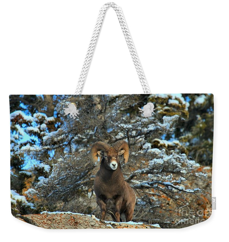Big Horn Weekender Tote Bag featuring the photograph King Of The Canadian Rockies by Adam Jewell