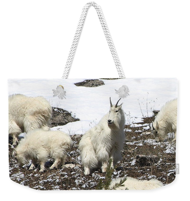 Mountain Goats Weekender Tote Bag featuring the photograph King Of The Hill by DeeLon Merritt