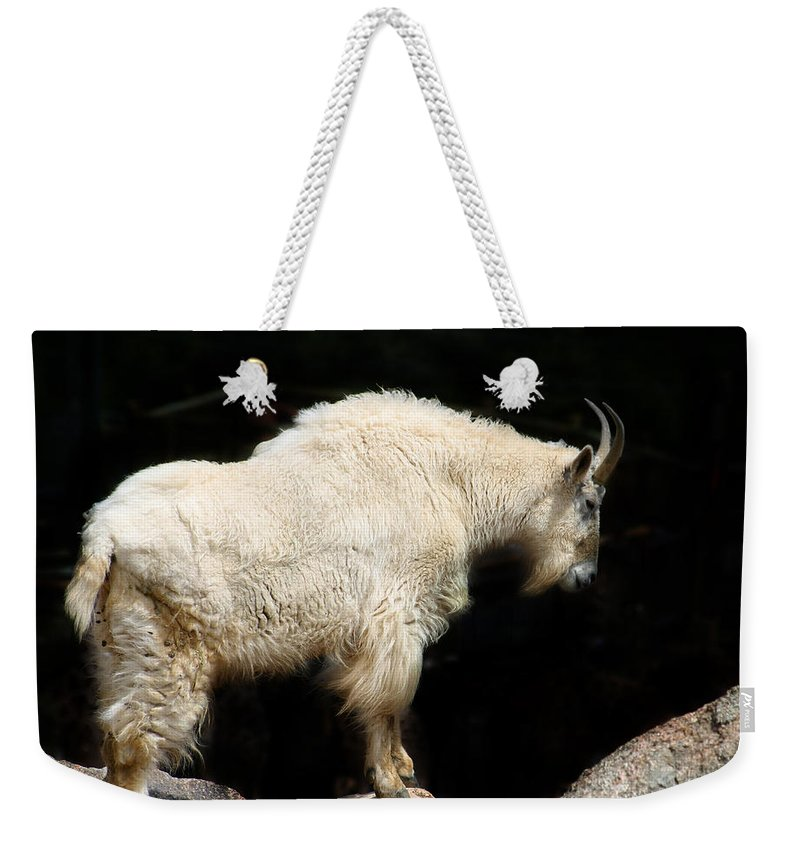 Wildlife Weekender Tote Bag featuring the photograph King Of The Mountain by Anthony Jones