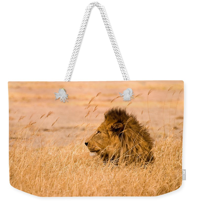 3scape Weekender Tote Bag featuring the photograph King Of The Pride by Adam Romanowicz